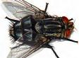 Combattre les mouches